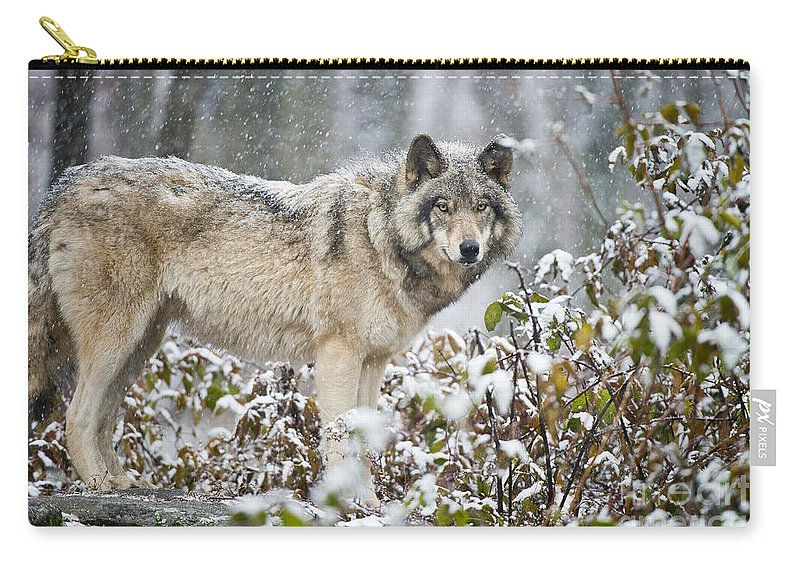 Timber Wolf Carry-all Pouch featuring the photograph Timber Wolf Pictures 1397 by World Wildlife Photography
