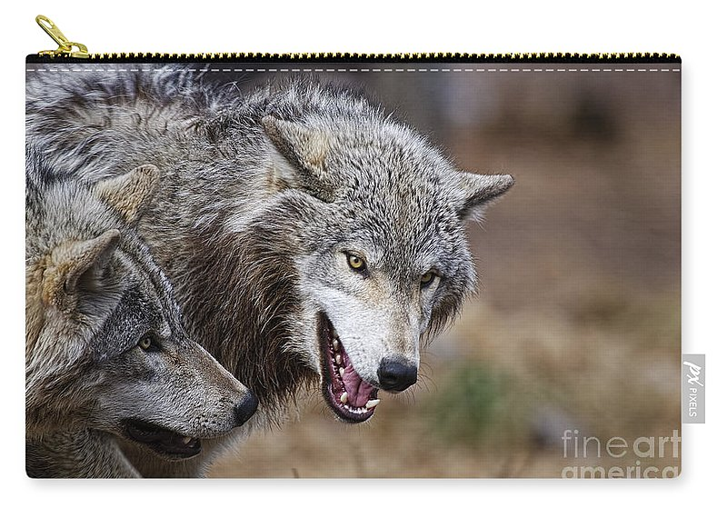 Timber Wolf Carry-all Pouch featuring the photograph Timber Wolf Pictures 173 by World Wildlife Photography
