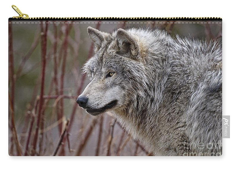 Timber Wolf Carry-all Pouch featuring the photograph Timber Wolf Pictures 197 by World Wildlife Photography