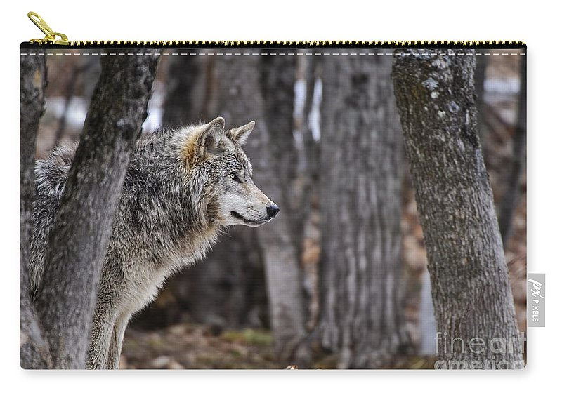 Timber Wolf Carry-all Pouch featuring the photograph Timber Wolf Pictures 203 by World Wildlife Photography
