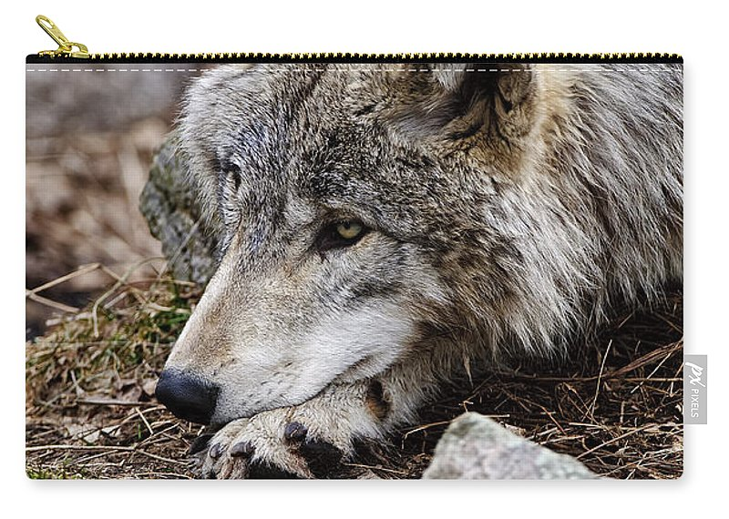 Timber Wolf Carry-all Pouch featuring the photograph Timber Wolf Pictures 205 by World Wildlife Photography