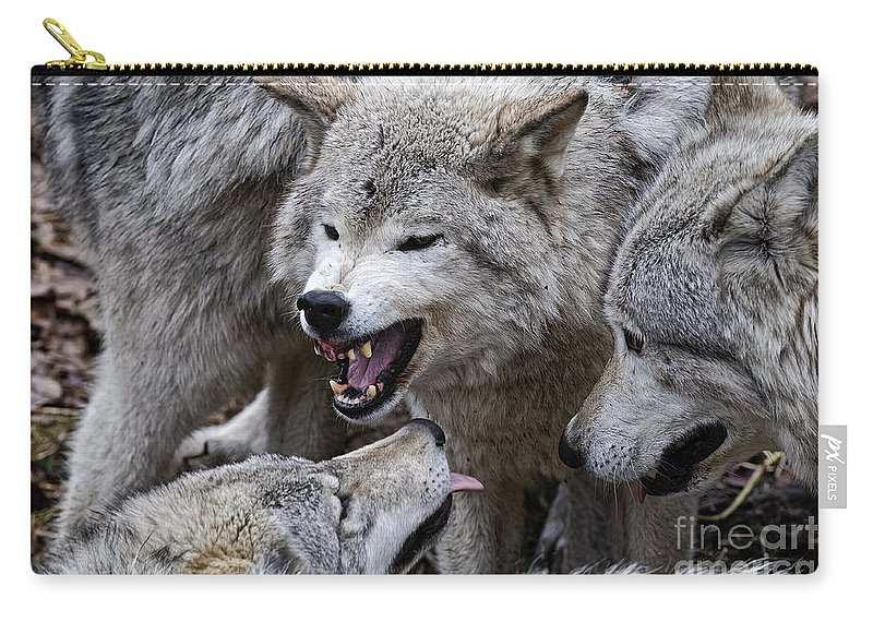 Timber Wolf Carry-all Pouch featuring the photograph Timber Wolf Pictures 210 by World Wildlife Photography