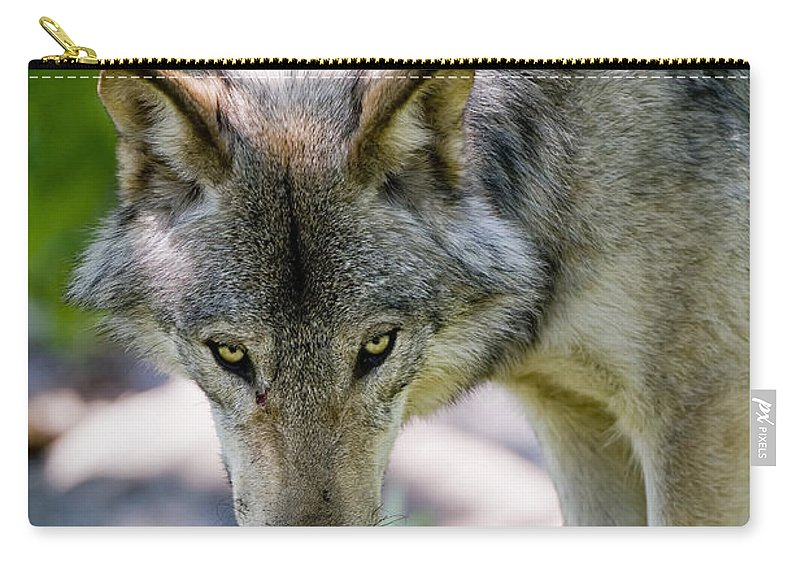 Timber Wolf Carry-all Pouch featuring the photograph Timber Wolf Pictures 294 by World Wildlife Photography