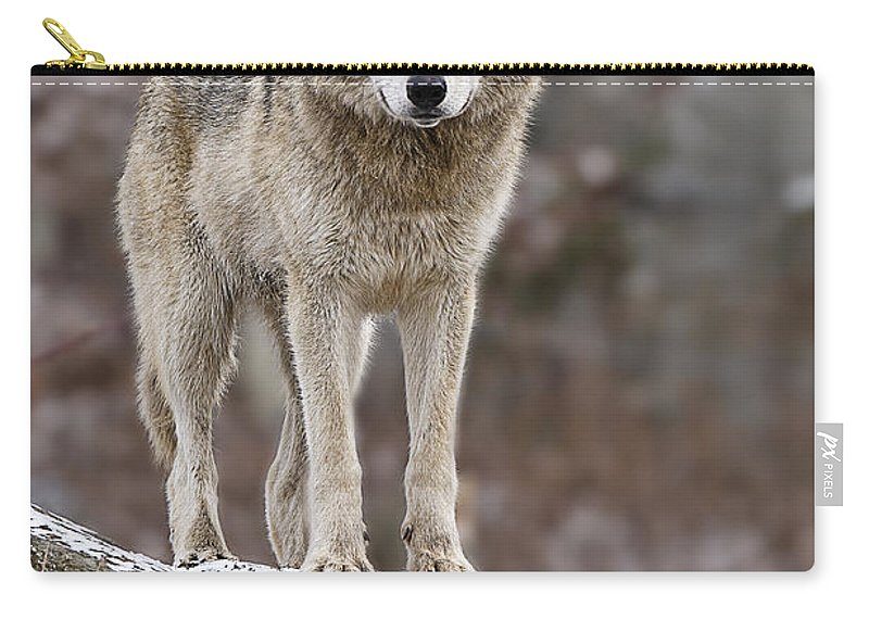 Timber Wolf Carry-all Pouch featuring the photograph Timber Wolf Pictures 495 by World Wildlife Photography