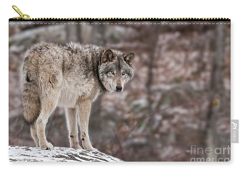Timber Wolf Carry-all Pouch featuring the photograph Timber Wolf Pictures 498 by World Wildlife Photography