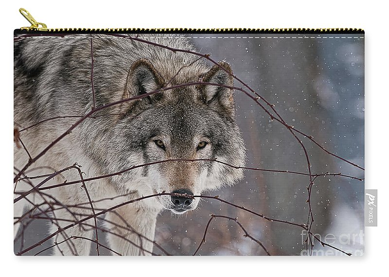 Timber Wolf Carry-all Pouch featuring the photograph Timber Wolf Pictures 620 by World Wildlife Photography