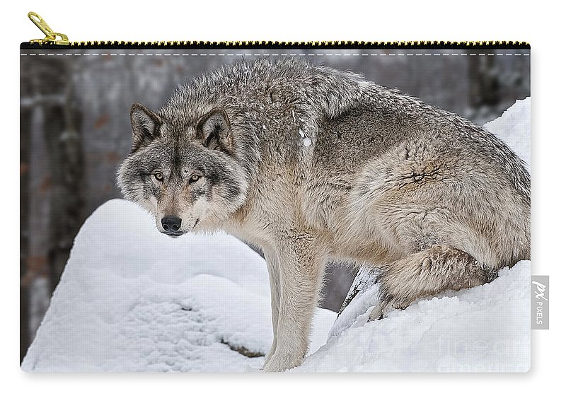 Timber Wolf Carry-all Pouch featuring the photograph Timber Wolf Pictures 683 by World Wildlife Photography