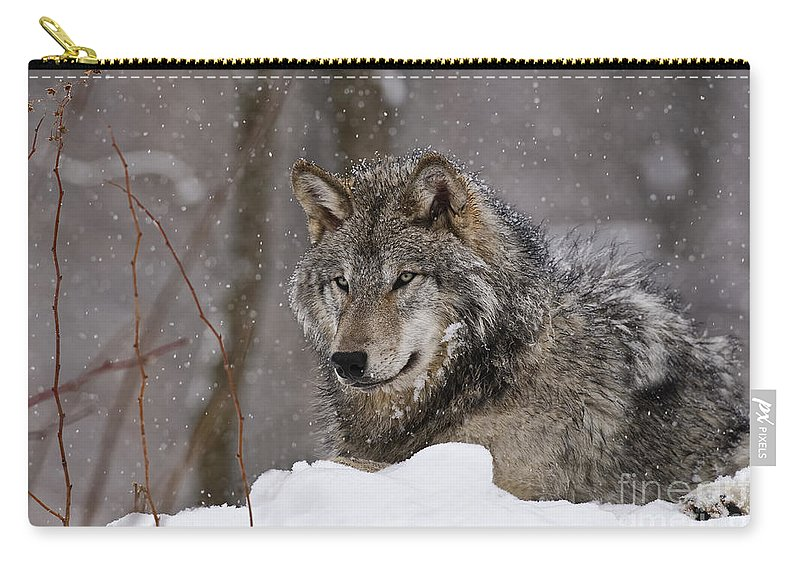 Timber Wolf Carry-all Pouch featuring the photograph Timber Wolf Pictures 74 by World Wildlife Photography