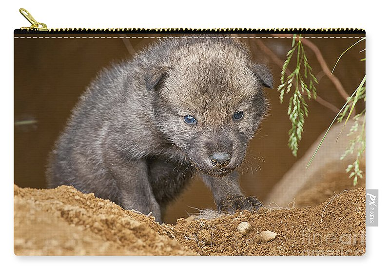 Timber Wolf Carry-all Pouch featuring the photograph Timber Wolf Pictures 782 by World Wildlife Photography