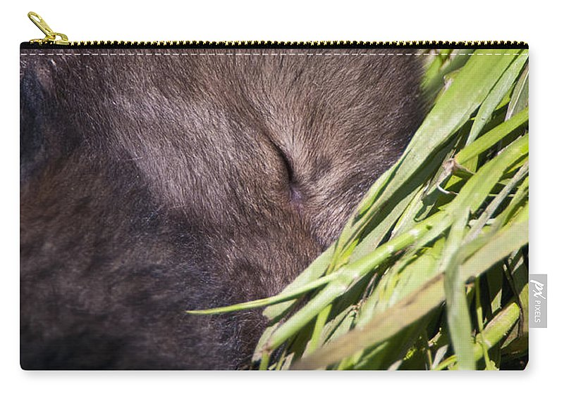 Timber Wolf Carry-all Pouch featuring the photograph Timber Wolf Pictures 820 by World Wildlife Photography