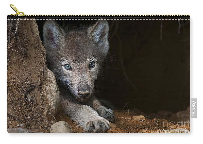Timber Wolf Carry-all Pouch featuring the photograph Timber Wolf Pictures 875 by World Wildlife Photography