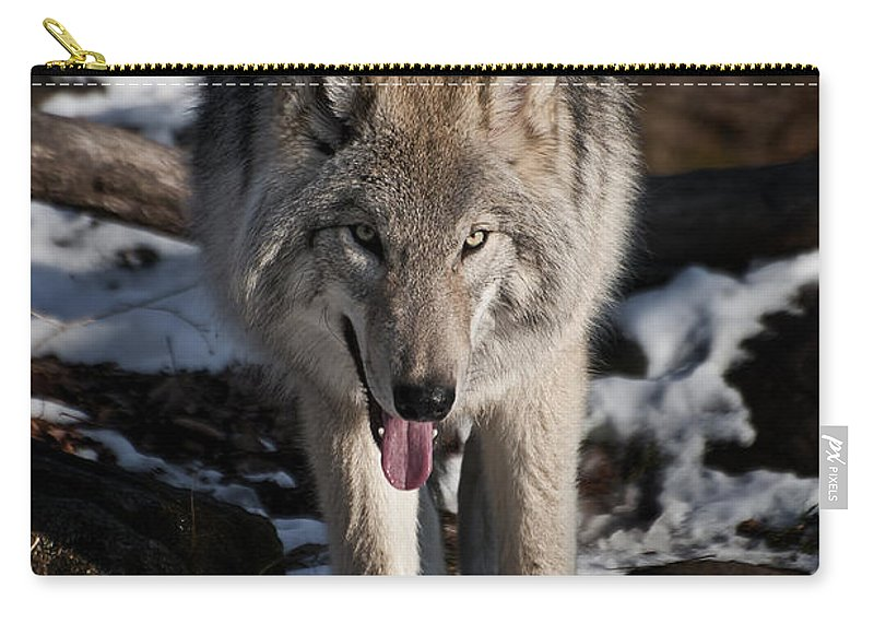 Timber Wolf Carry-all Pouch featuring the photograph Timber Wolf Pictures 954 by World Wildlife Photography