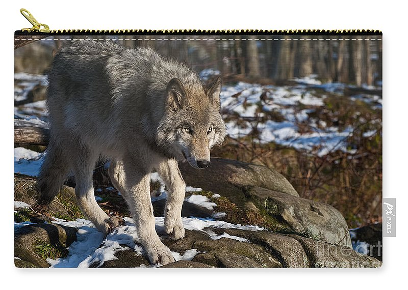 Timber Wolf Carry-all Pouch featuring the photograph Timber Wolf Pictures 969 by World Wildlife Photography