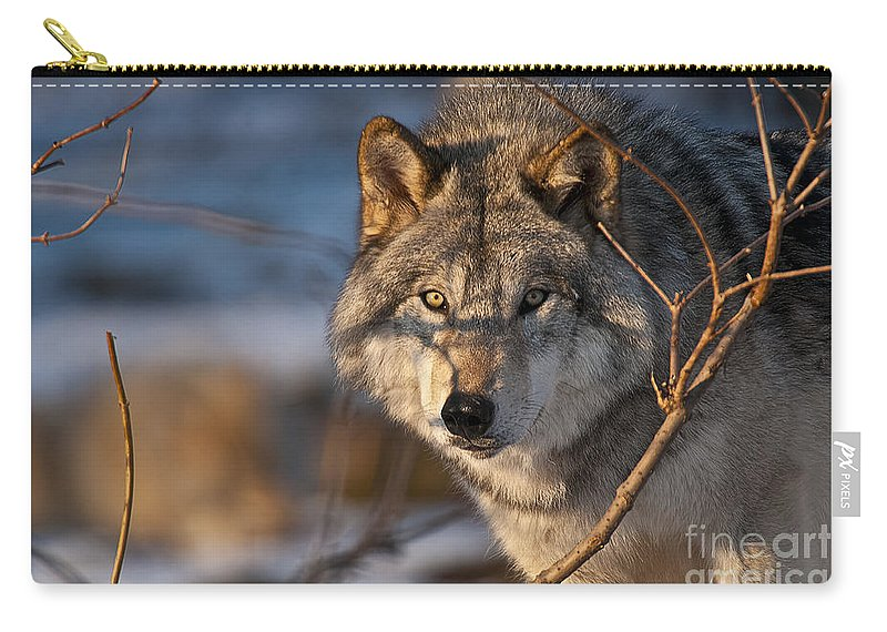 Timber Wolf Carry-all Pouch featuring the photograph Timber Wolf Pictures 981 by World Wildlife Photography