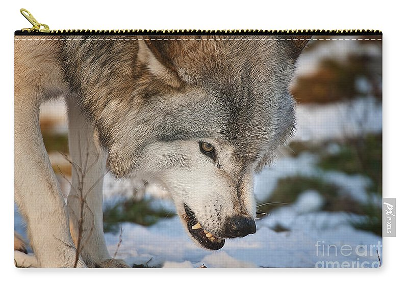 Timber Wolf Carry-all Pouch featuring the photograph Timber Wolf Pictures 985 by World Wildlife Photography