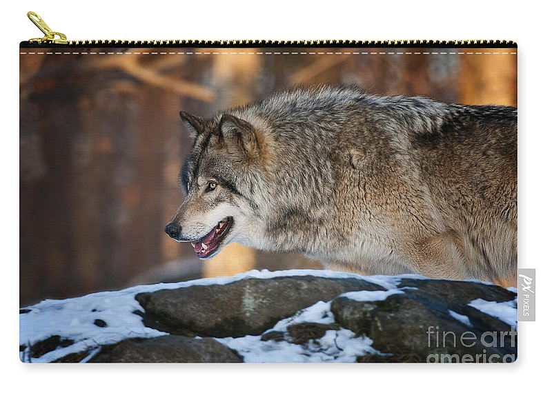 Timber Wolf Carry-all Pouch featuring the photograph Timber Wolf Pictures 991 by World Wildlife Photography