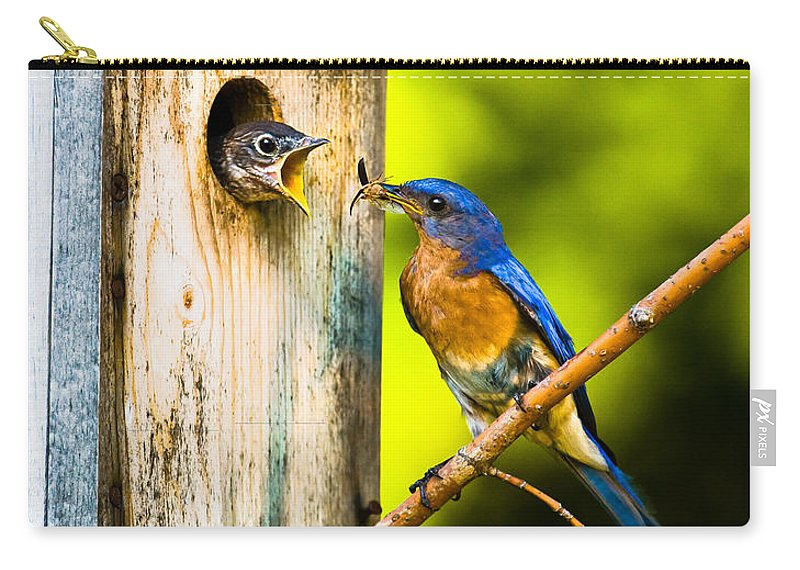 Bluebird Carry-all Pouch featuring the photograph Time To Fly by Ronald Lutz