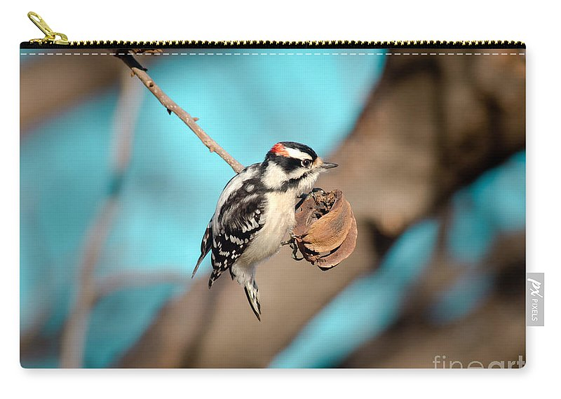 Animal Carry-all Pouch featuring the photograph Tiny Downy On Hickory Nut by Robert Frederick