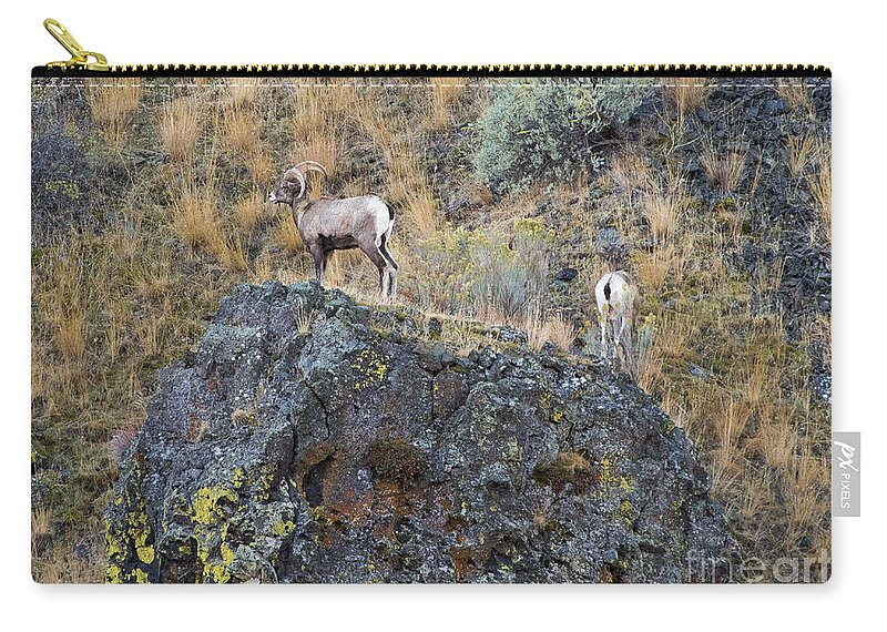 Ram Carry-all Pouch featuring the photograph Top Of The Rock by Mike Dawson