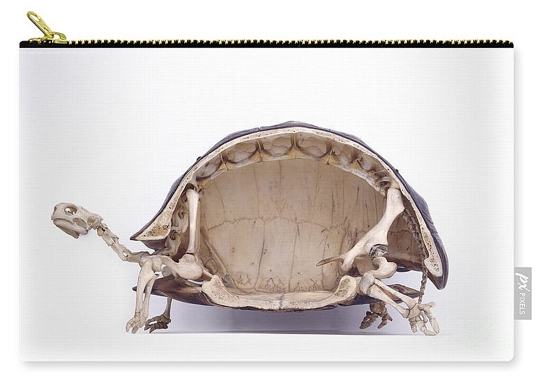 Tortoise Skeleton Cross Section Carry All Pouch For Sale By Colin