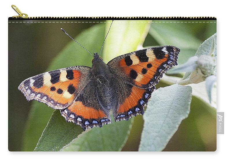Tortoiseshell Carry-all Pouch featuring the photograph Tortoiseshell 2 by Richard Thomas