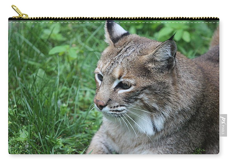 Cat Carry-all Pouch featuring the photograph Tough Cat by Tiffany Erdman