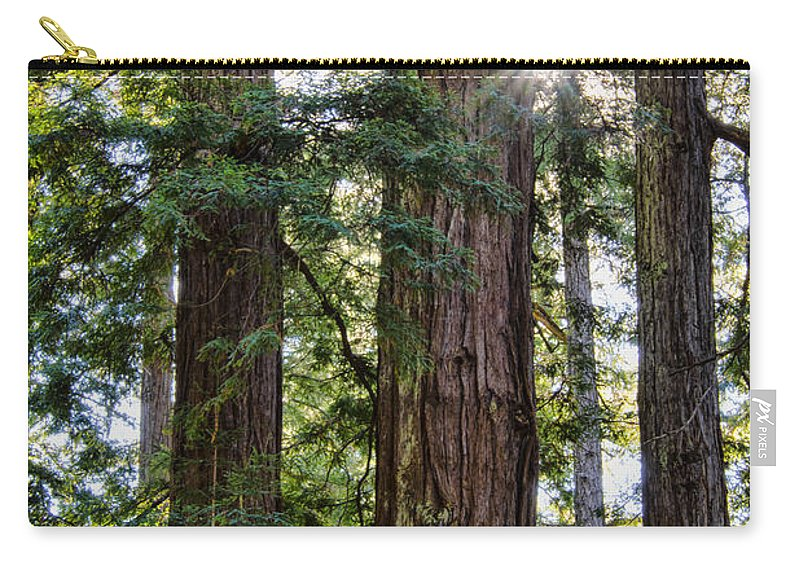 Trees Carry-all Pouch featuring the photograph Towering Redwoods by Erika Fawcett