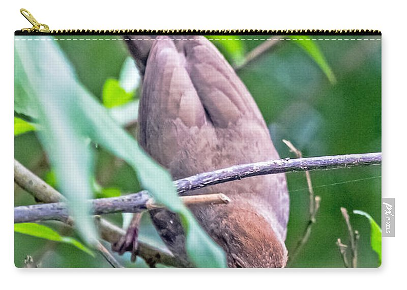 Bird Carry-all Pouch featuring the photograph Towhee by Kate Brown