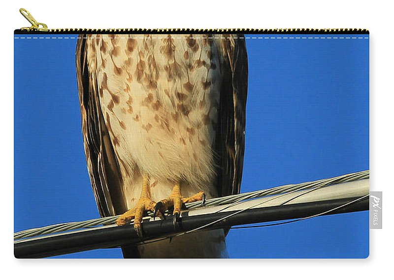 Reid Callaway Red Shouldered Hawk Carry-all Pouch featuring the photograph Traffic Hawk by Reid Callaway