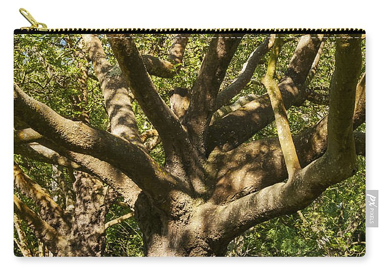 Christchurch New Zealand Hagley Park Parks Oak Tree Trees Limb Limbs Branch Branches Trunk Trunks Leaf Leaves Carry-all Pouch featuring the photograph Tree Trunk And Limbs by Bob Phillips