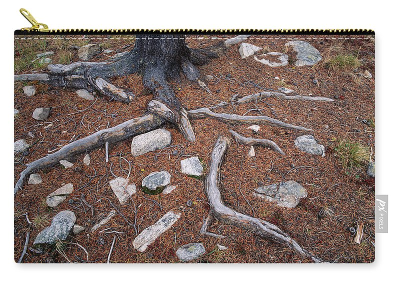 Rocks Carry-all Pouch featuring the photograph Tree Trunk Roots And Rocks by Tracy Knauer