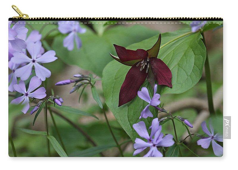 Trillium And Phlox (trillium Vaseyi & Phlox Divaricata) Carry-all Pouch featuring the photograph Trillium And Phlox by Daniel Reed