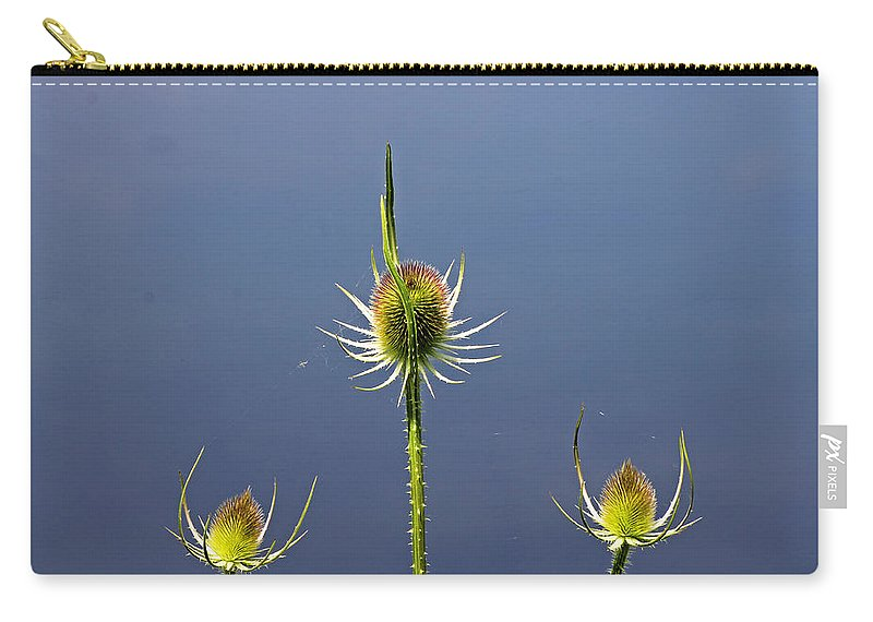 Cotswolds Carry-all Pouch featuring the photograph Trio Of Teasels by Tony Murtagh