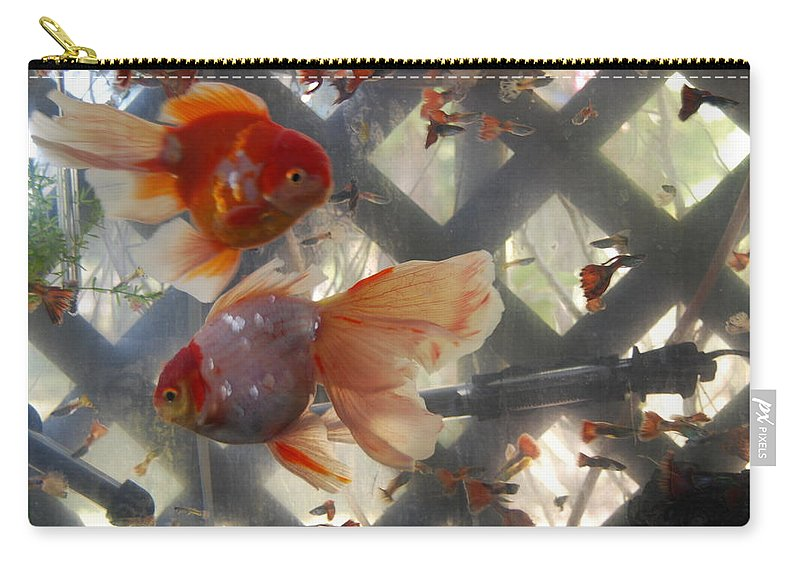 Taken Through Side Of Aquarium Carry-all Pouch featuring the photograph Triple Tail Goldfish by Robert Floyd