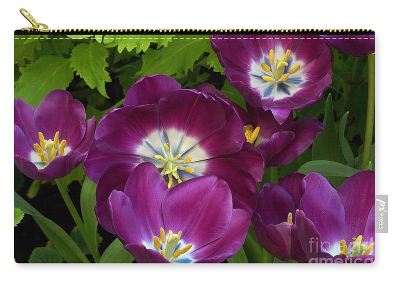 Riumph Tulips Carry-all Pouch featuring the photograph Triumph Tulips Negrita Variety by Byron Varvarigos