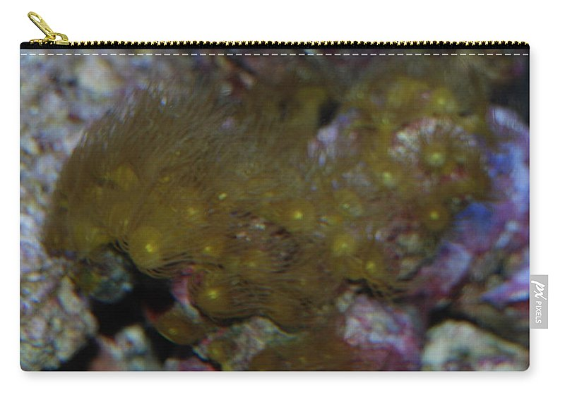 Shot Through Side Of Aquarium Carry-all Pouch featuring the photograph Tropica Fish by Robert Floyd
