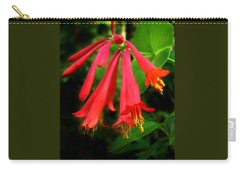 Lonicera Sempervirens Carry-all Pouch featuring the photograph Wild Trumpet Honeysuckle by William Tanneberger