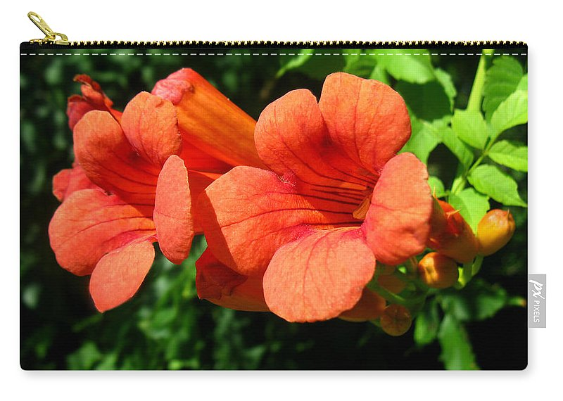 Campsis Radicans Carry-all Pouch featuring the photograph Wild Trumpet Vine by William Tanneberger