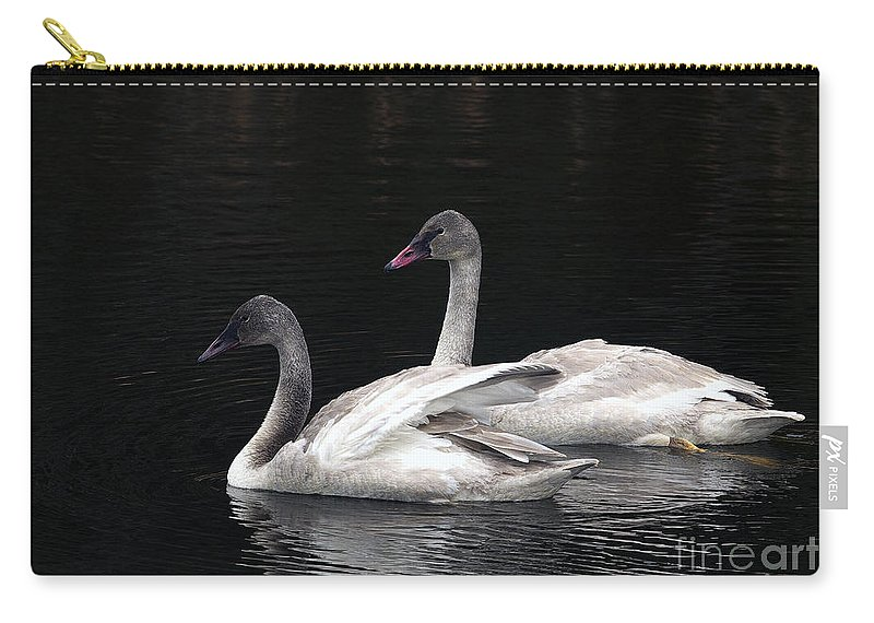 Trumpeter Swan Carry-all Pouch featuring the photograph Trumpeter Swan Cygnets by Sharon Talson