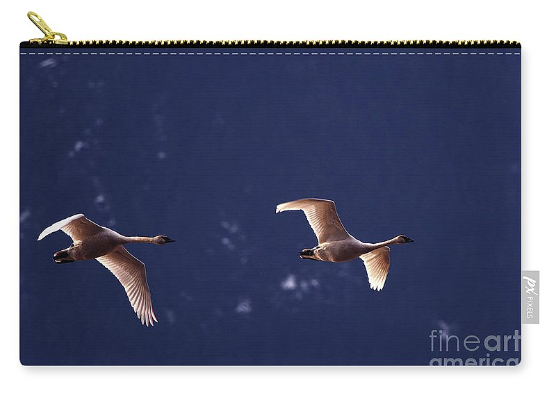 Trumpeter Swans Carry-all Pouch featuring the photograph Trumpeter Swans In-flight by Sharon Talson