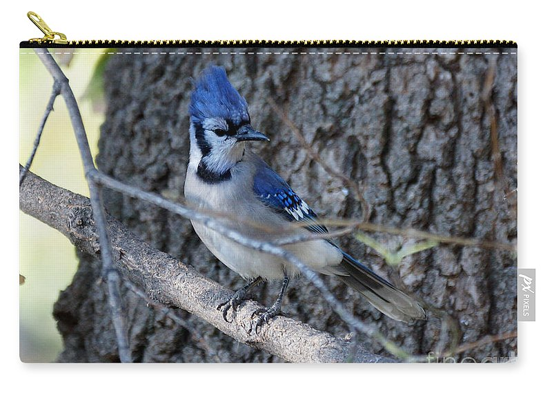 Blue Jay Carry-all Pouch featuring the photograph Tuff Guy by Lori Tordsen