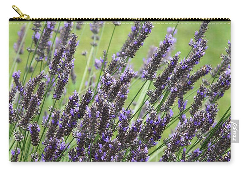 Lavender Carry-all Pouch featuring the photograph Tuilieres Lavender by Carol Groenen