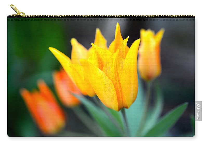 Tulip Carry-all Pouch featuring the photograph Tulip In Yellow by Randy Giesbrecht