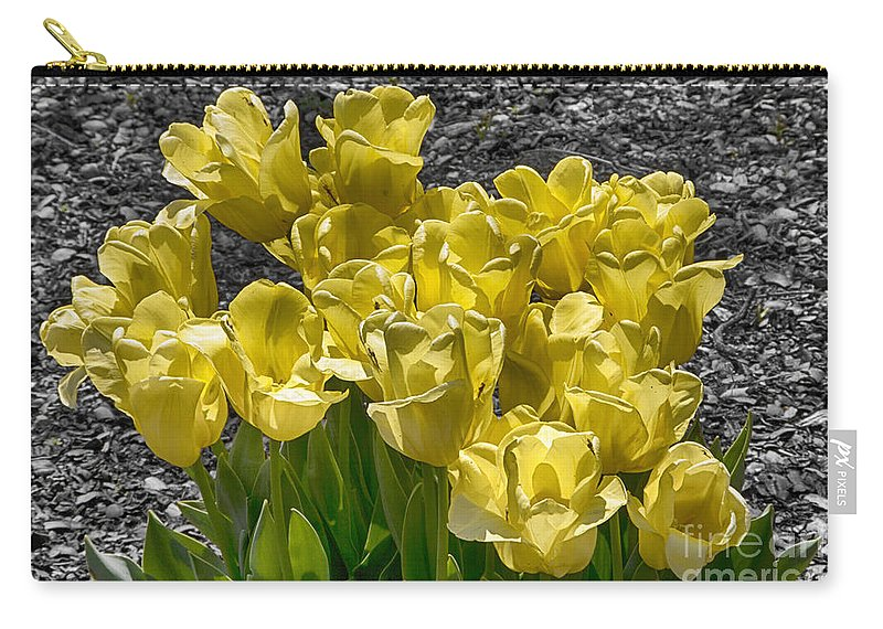 Tulips Carry-all Pouch featuring the photograph Tulips At Dallas Arboretum V23 by Douglas Barnard