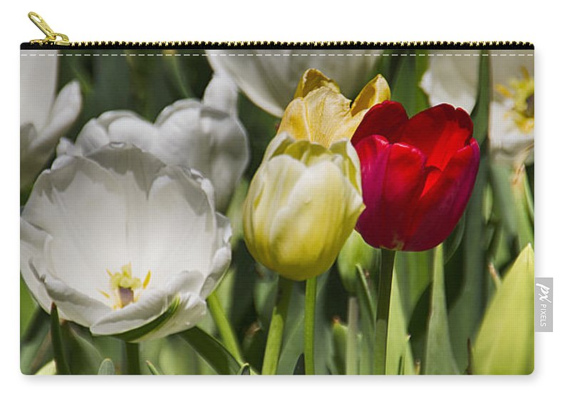 Tulips Carry-all Pouch featuring the photograph Tulips At Dallas Arboretum V30 by Douglas Barnard
