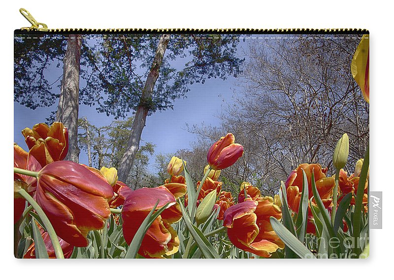 Tulips Carry-all Pouch featuring the photograph Tulips At Dallas Arboretum V37 by Douglas Barnard