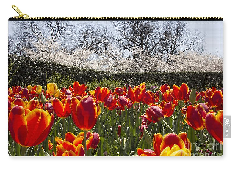 Tulips Carry-all Pouch featuring the photograph Tulips At Dallas Arboretum V39 by Douglas Barnard