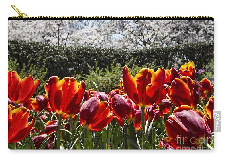 Tulips Carry-all Pouch featuring the photograph Tulips At Dallas Arboretum V41 by Douglas Barnard