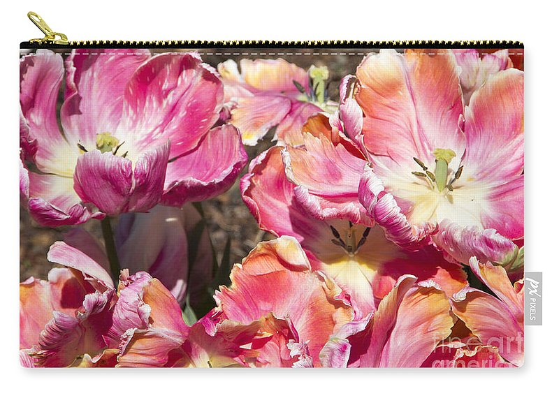 Tulips Carry-all Pouch featuring the photograph Tulips At Dallas Arboretum V58 by Douglas Barnard