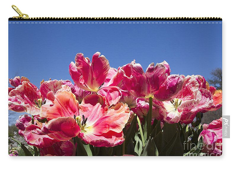 Tulips Carry-all Pouch featuring the photograph Tulips At Dallas Arboretum V60 by Douglas Barnard